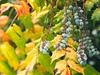 Fruit Garden Bokeh | 20. Juni 2020 | Schleswig-Holstein - Deutschland