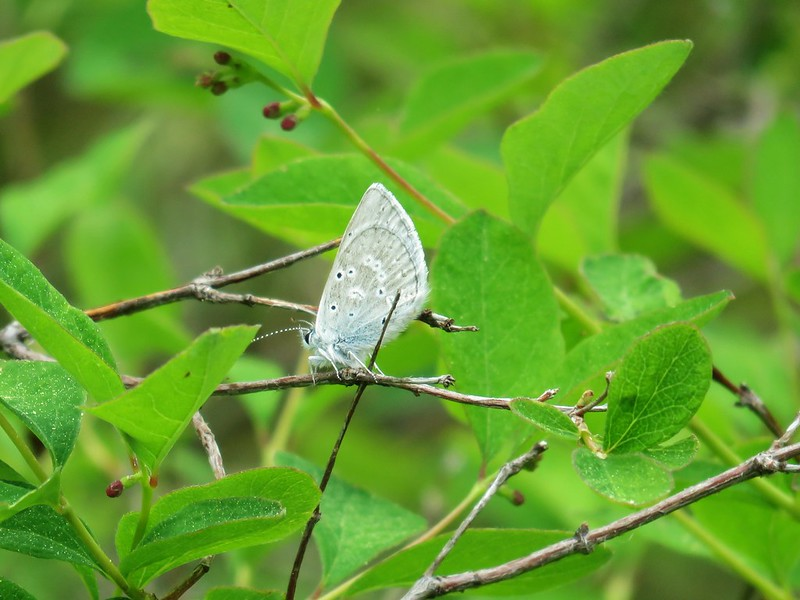 Butterfly along the Green Ridge Trail