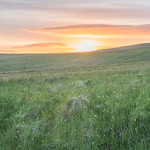 Meadows on Divis