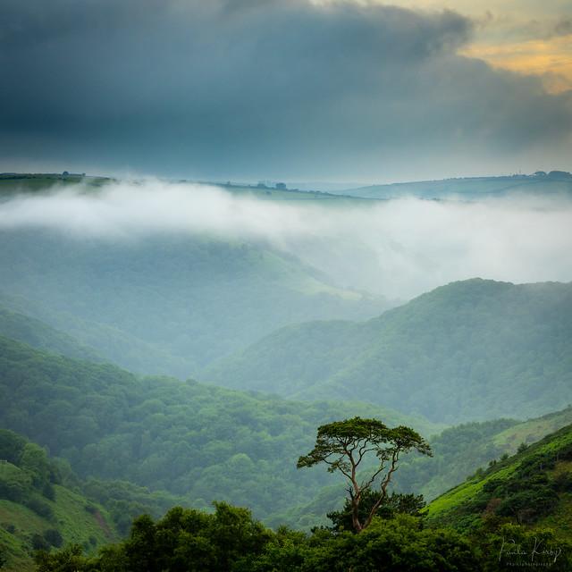 Exmoor Mist
