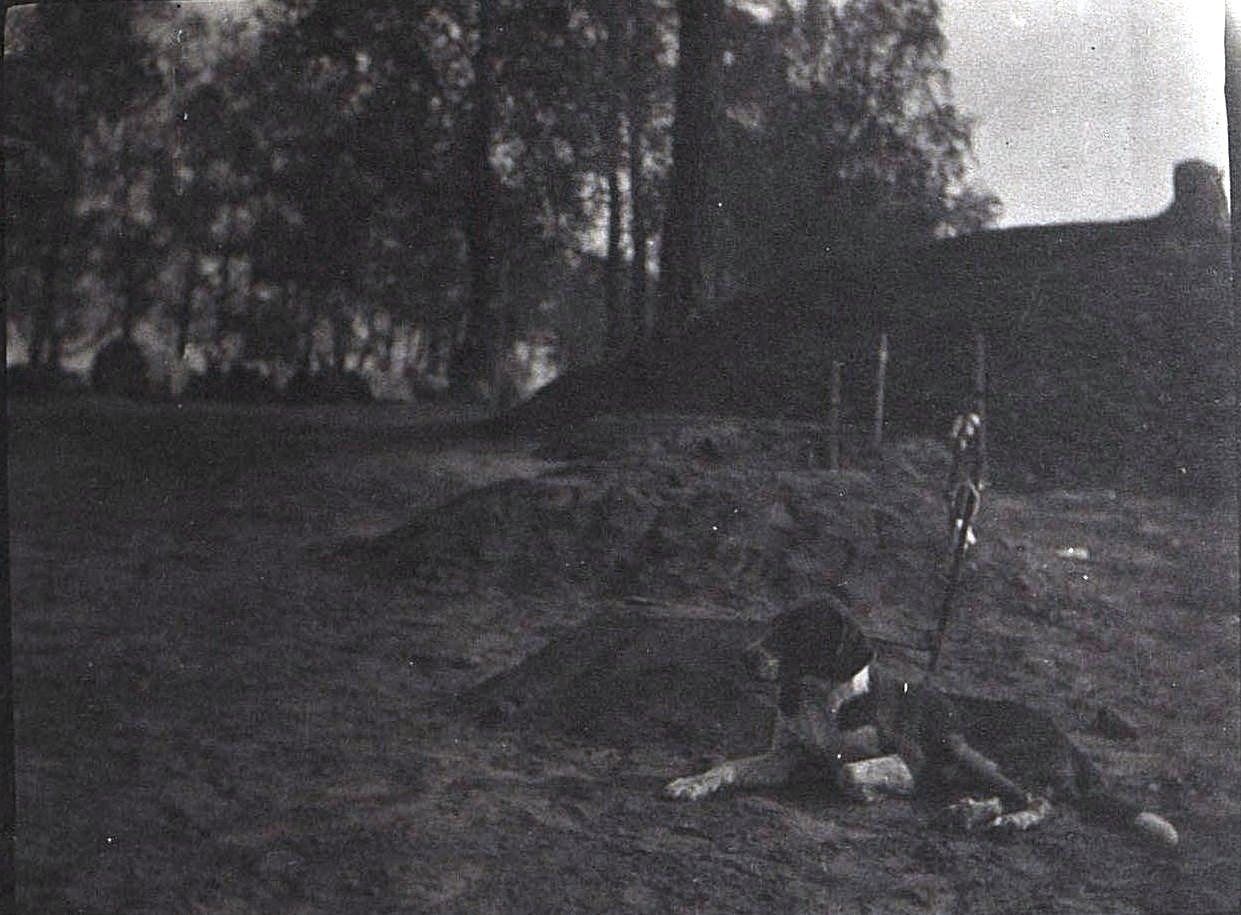 Одинокая могила в лесу