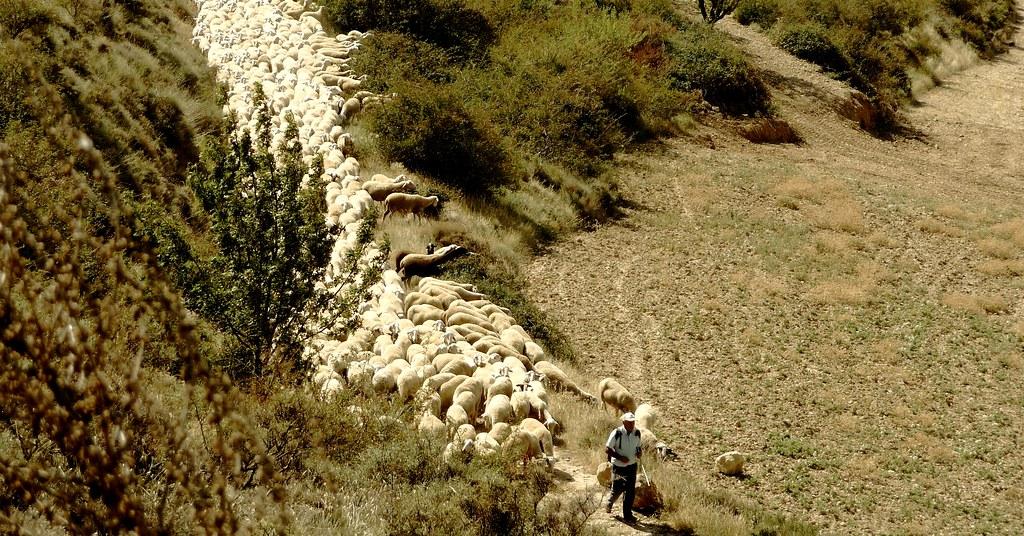 Loarre (Huesca, Aragon, Sp) – El pastor