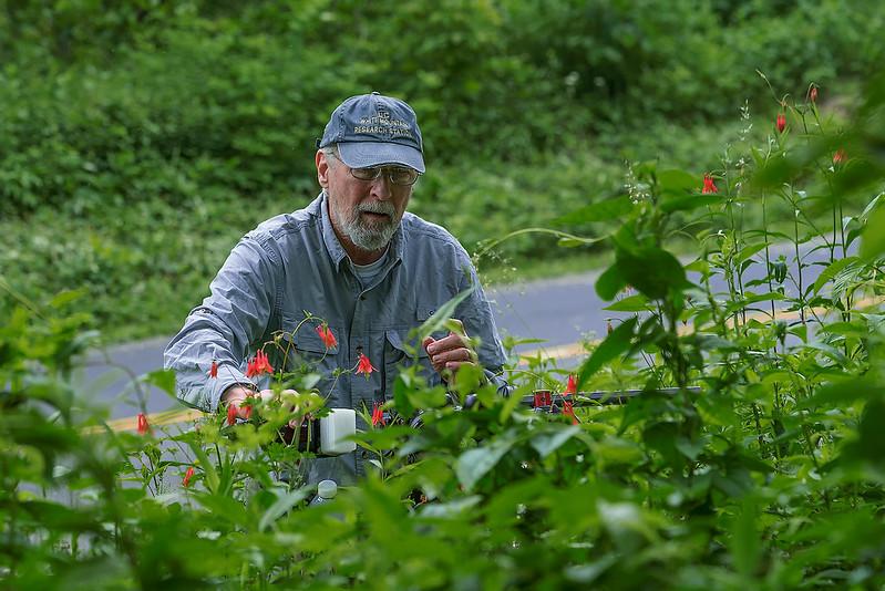 Jim photographing Eastern red Columbine