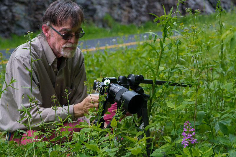 Walter Ezell and the Large Purple Fringed orchid