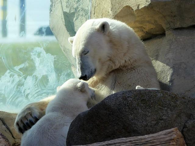 Zoo am Meer