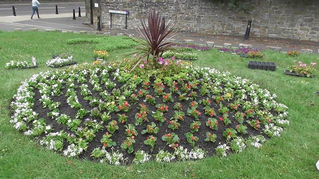Planting Up Whickham Church Green  June 20 (6)