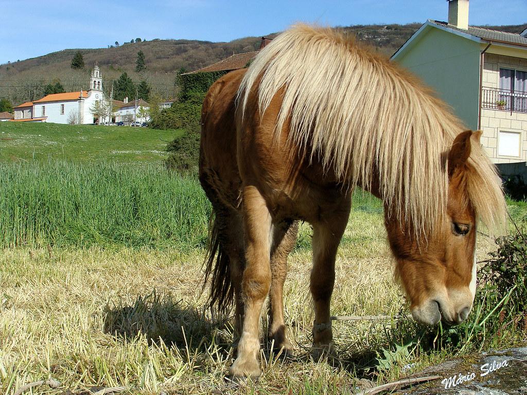 cavalo_ms