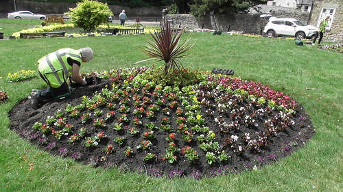 Planting Up Whickham Church Green  June 20 (11)