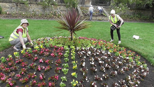 Planting Up Whickham Church Green  June 20 (7)