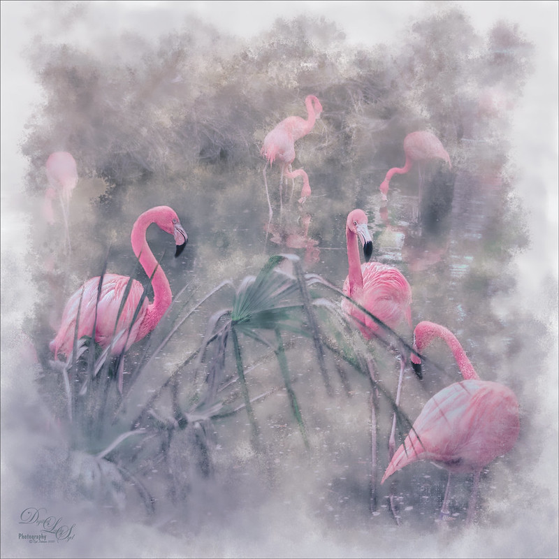 Image of a group of Flamingos called Flamboyance