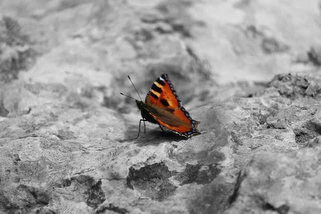 Small tortoiseshell riding on the stone