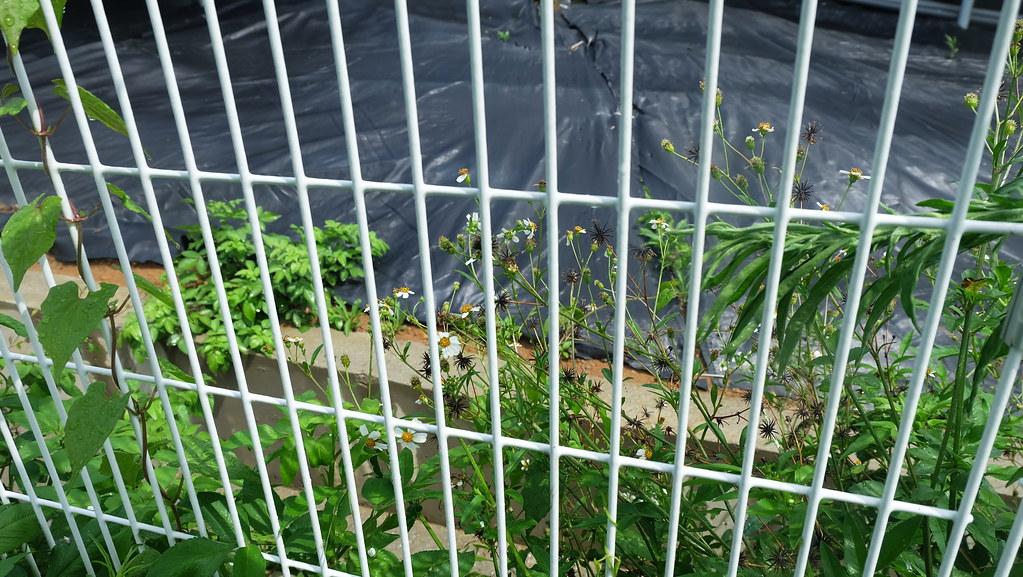 光電廠圍欄沒有留下野生動物進出的空間,留下棲地破碎的爭議。攝影:陳文姿