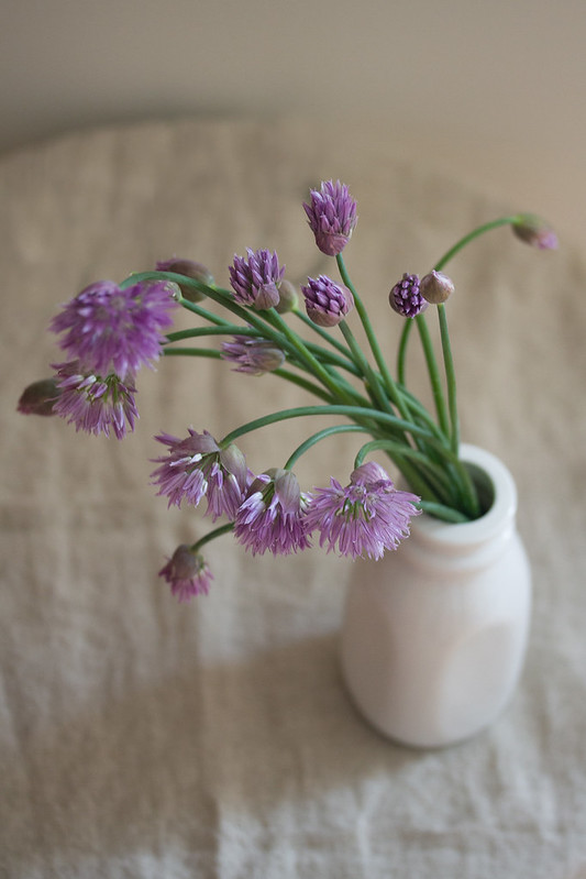 Jar of Chive Blossoms