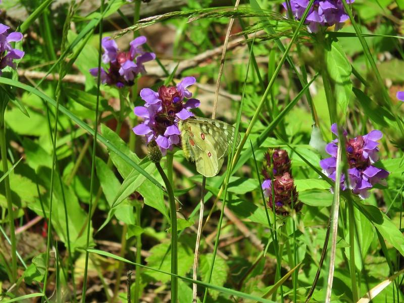 Butterfly on self-heal