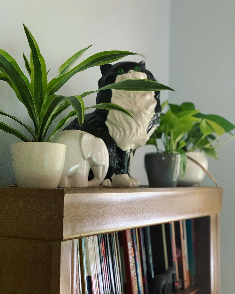 Plants on top of a bookshelf with a large ceramic cat