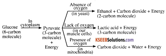 KSEEB Class 10 Science Important Questions Chapter 4 Carbon and Its Compounds 7