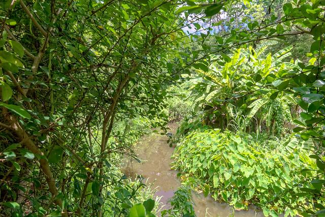 Sankampaeng Hot Spring (102 sur 155)