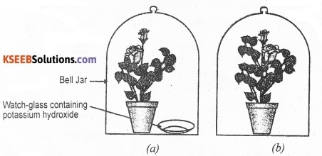 KSEEB Class 10 Science Important Questions Chapter 4 Carbon and Its Compounds 4