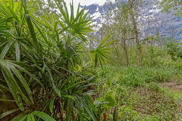 Sankampaeng Hot Spring (72 sur 155)