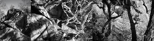 landscape newengland rhodeisland bw blackandwhite iphone iphoneonly iphone7plus photopanels autumn autumnfoliage dark emotive monochrome moody melancholy photoworkshop risdce