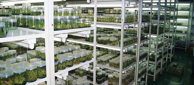 Tư vấn thi công lắp đặt phòng nuôi cấy mô thực vật