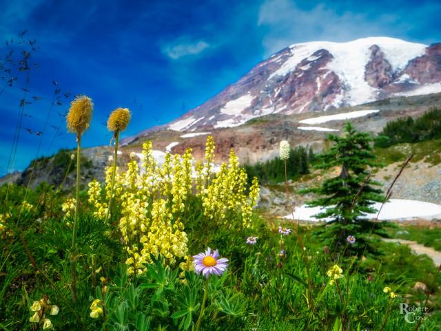 A Mountain Bouquet