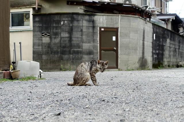 Today's Cat@2020ー06ー22