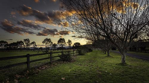 sunset richmond nsw australia trees rural green leaves winter