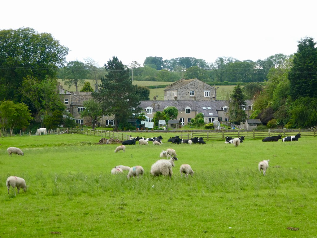 Sheep and cattle grazing beside the canal at Gargrave
