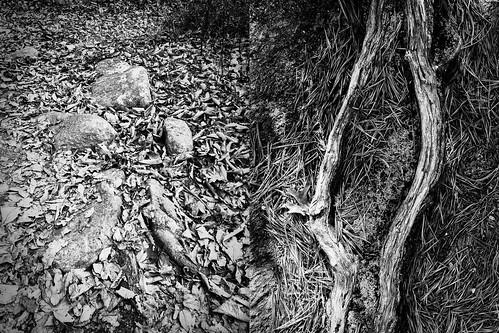 landscape newengland rhodeisland bw blackandwhite iphone iphoneonly iphone7plus diptych autumn autumnfoliage dark emotive monochrome moody melancholy photoworkshop risdce