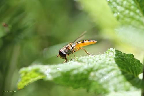 """Déficoncours """"Les insectes sur les plantes"""" - les participations 50034319952_df8a57f91f"""