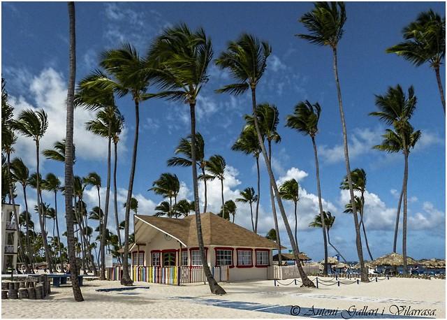 Palmeras, juguetes en el viento. (Cabeza de Toro - Rep. Dominicana) Explore 23-06-2020  (Rank 11 )