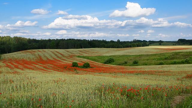bloody fields
