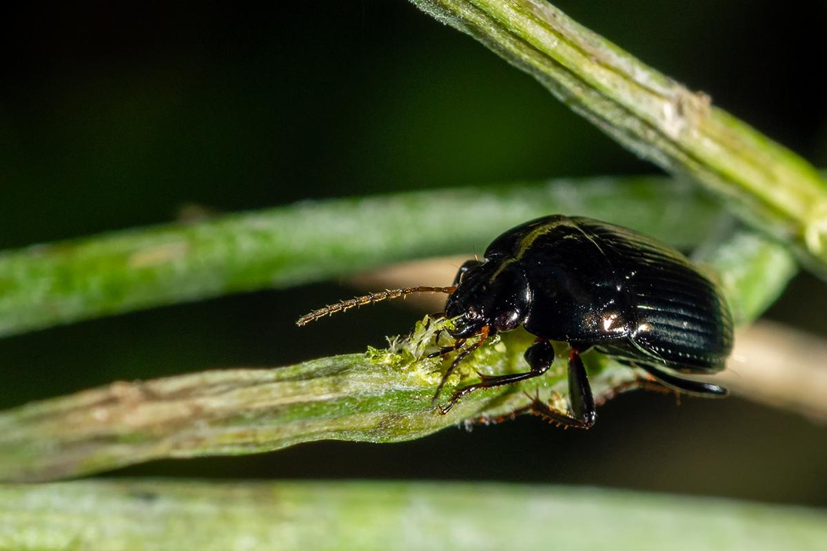 Macros/  proxi/  insectes  50035185177_4ef13c96a1_o