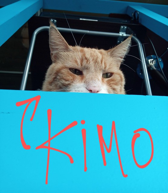 Kimo desde Blu G9