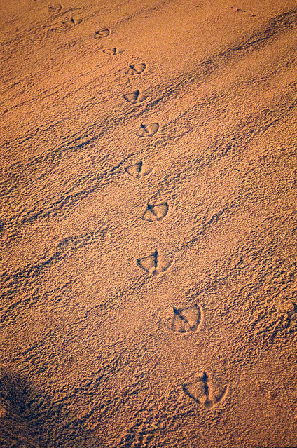 Only Footprints are Left