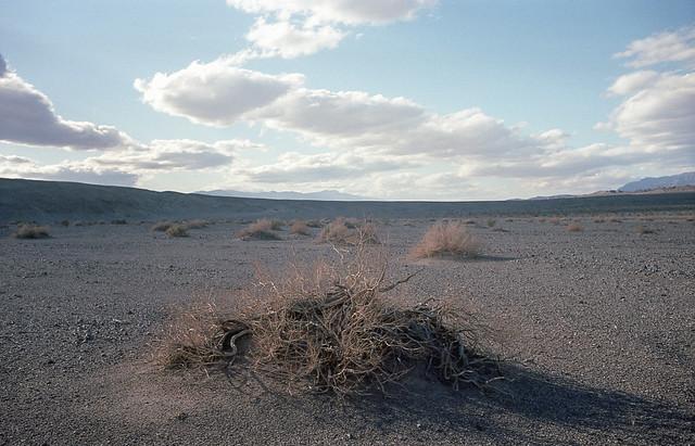 Sea level -- creosote bush skeletons