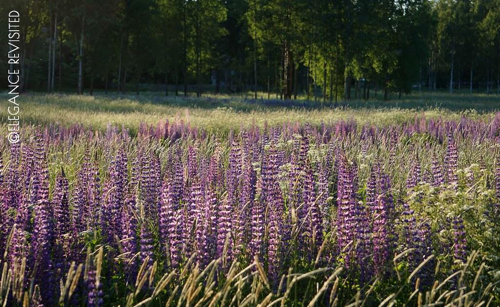 wild flowers 1300 x 800