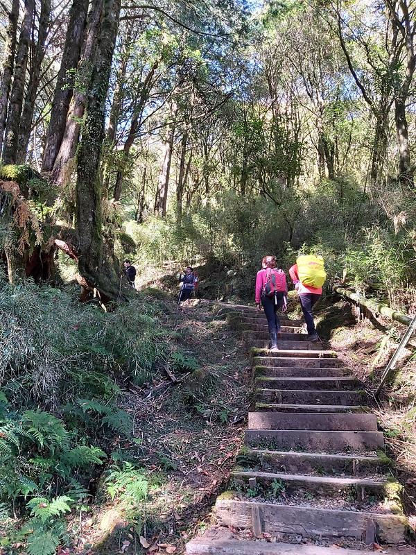 Mt. Data: steps to the highest peak of Alishan