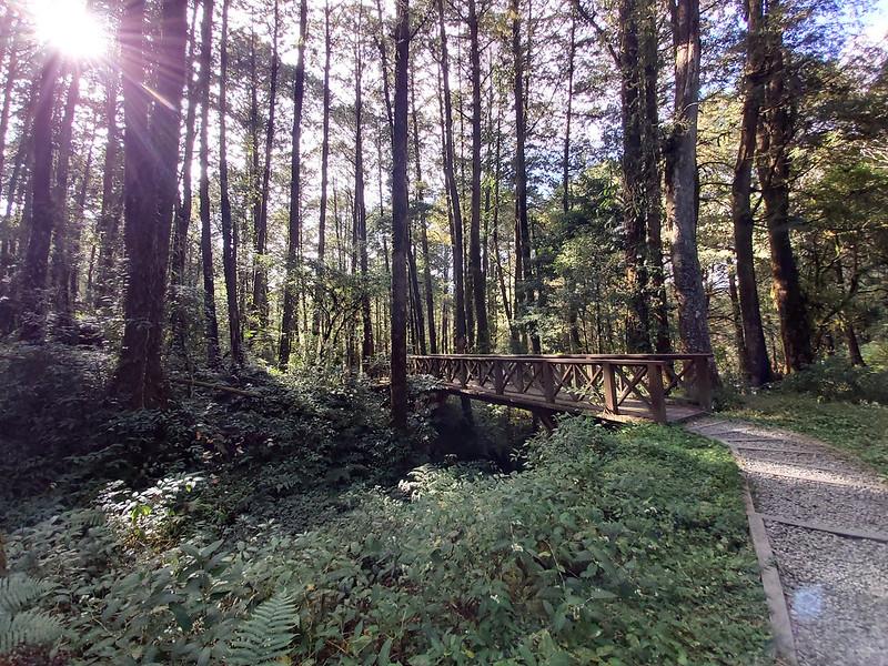 Mt. Data: Trail inside Alishan
