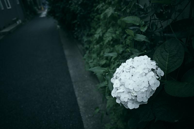 Nedzu, Ueno
