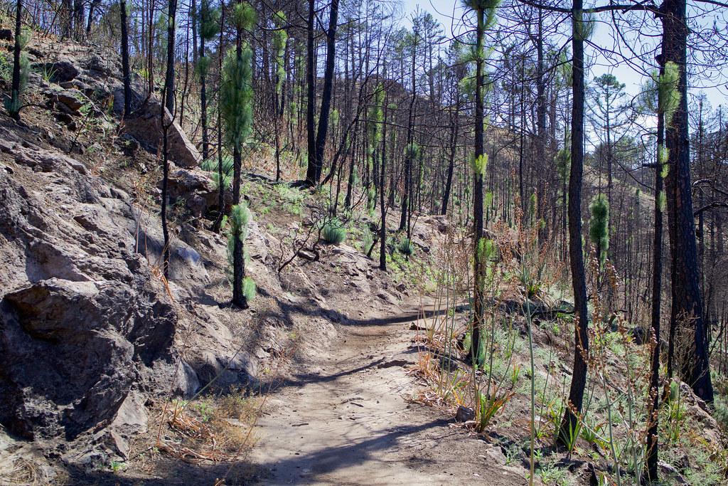 Sendero a montaña Altavista tras un incendio