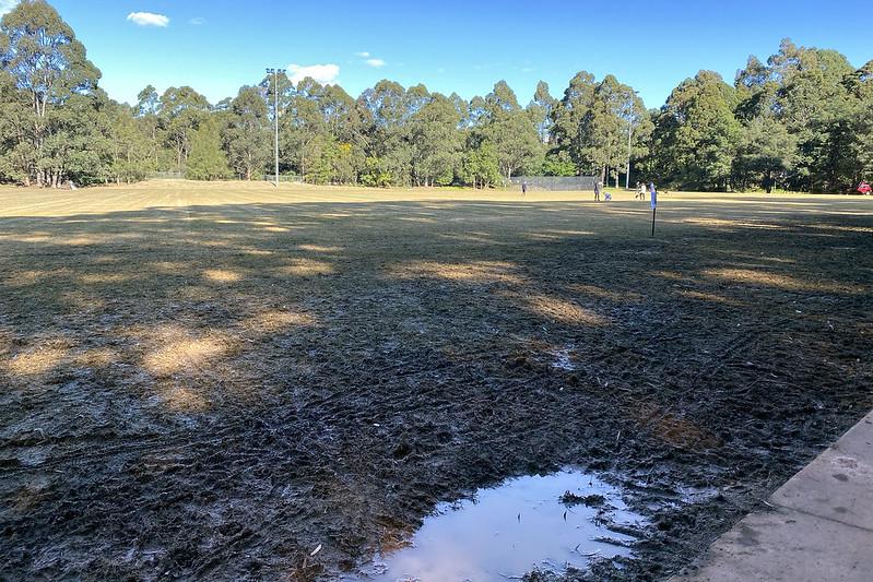 Artarmon Reserve mud