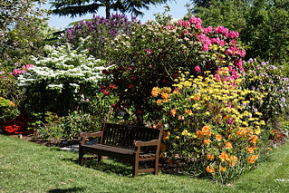 City of London Cemetery - Mixed rhododendron bed and bench | by Acabashi