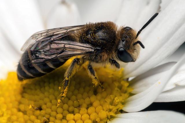 Cute Pollinator - _TNY_9974