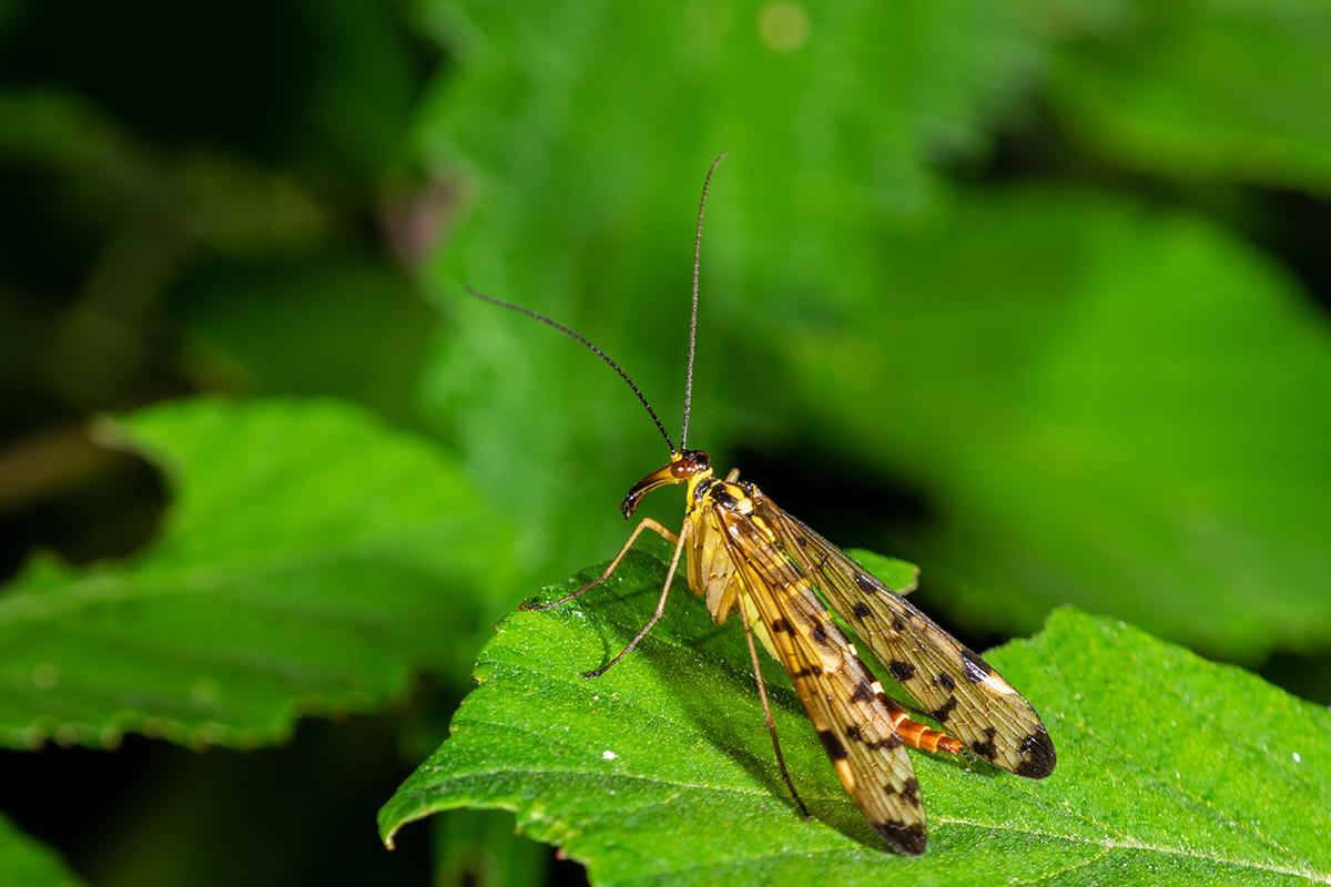 Macros/  proxi/  insectes  50037729013_ee707d52cf_o