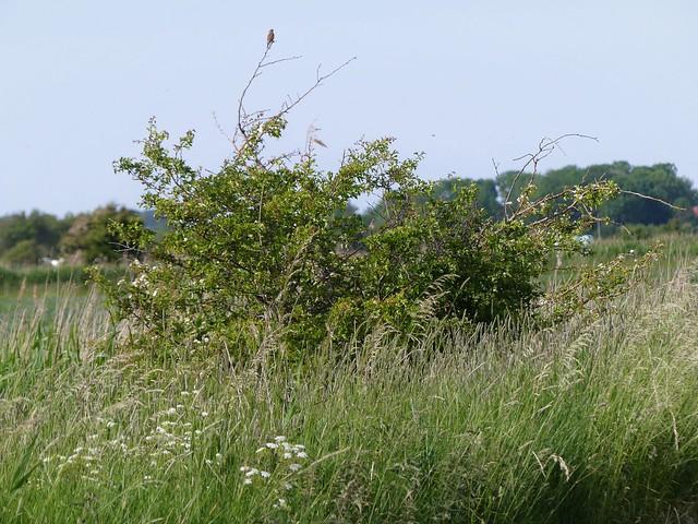 Naturschutzgebiet bei Bremerhaven