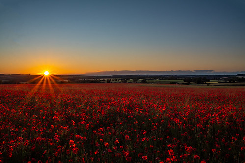 poppies poppy poppyfield wildflower flower flowers sunset gloucestershire landscape uk greatbritain canon canoneos canon80d canonuk countryside cotswolds countrylife nature