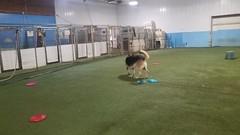 06-23-20 Frisbee