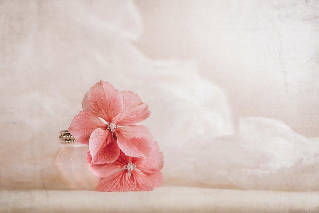 Soft pastel hydrangeas